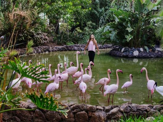 Oasis-Park-Fuerteventura_flamencos-528x396
