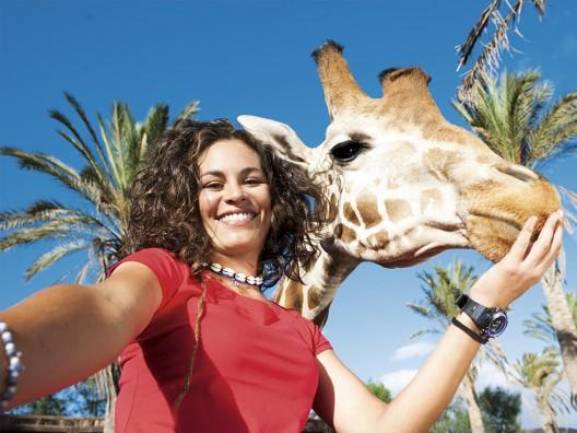 Oasis-Park-Fuerteventura_jirafa-528x396